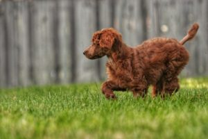 dog on grass representing pet safety when landscaping