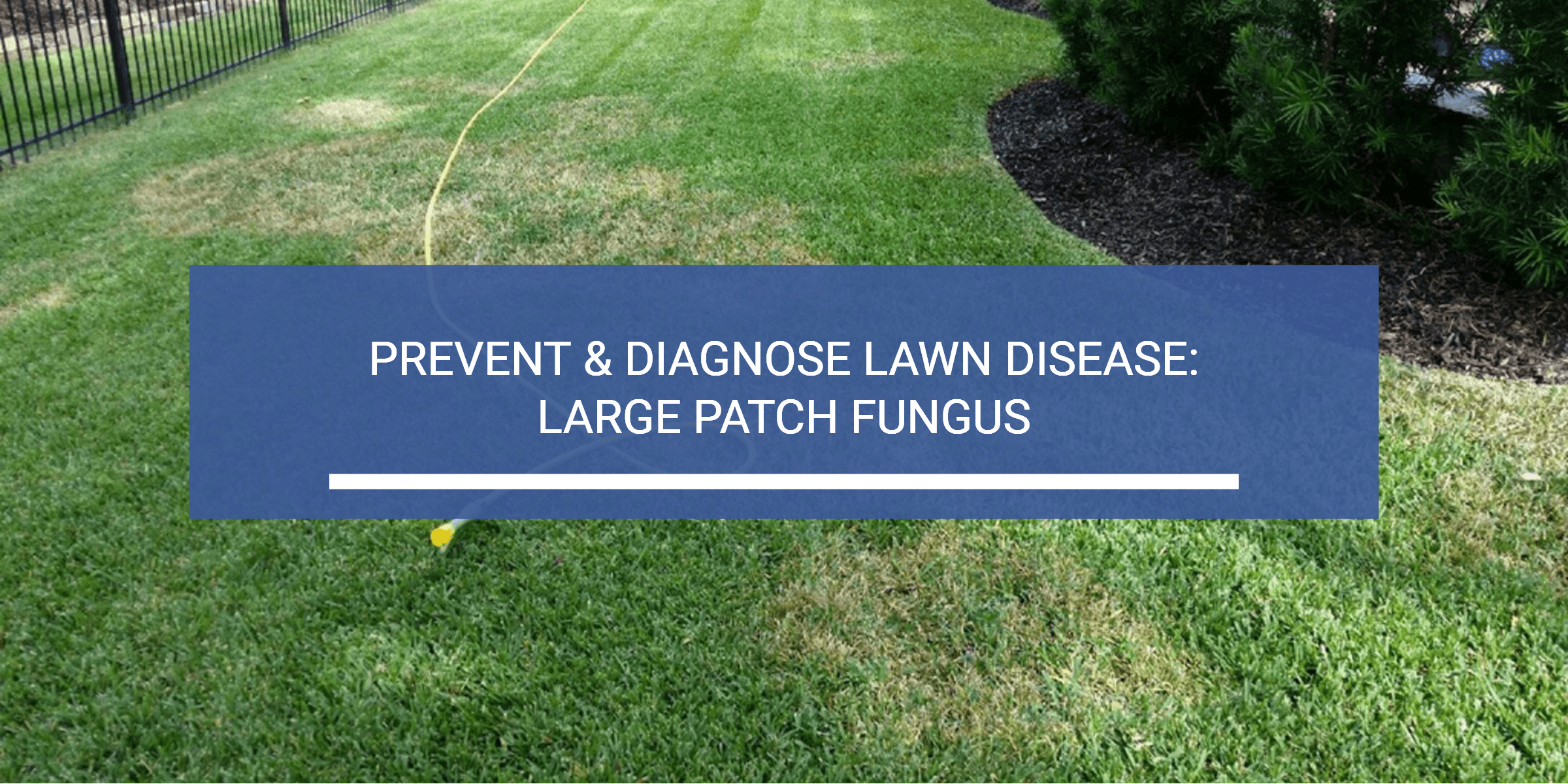 Lawn Disease Diagnosis and Prevention