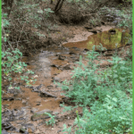 A Stream for Fun and Learning at Grand View Campground