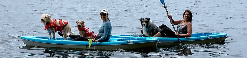 paddling with pups
