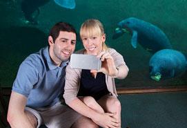 Lowry Park Zoo Manatees