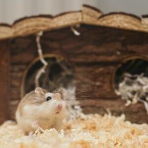 All Small Animal Bedding