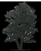 HMWCF Tree-only