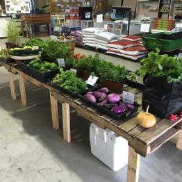 FarmShare-CSA-Week 3-1200x900_1215-030_1