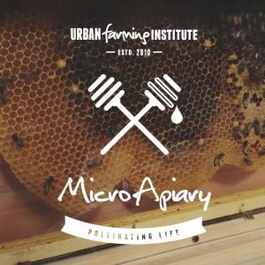 micro-apiary-main-img