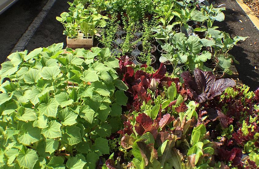 Community Garden at the Urban Farming Institute.