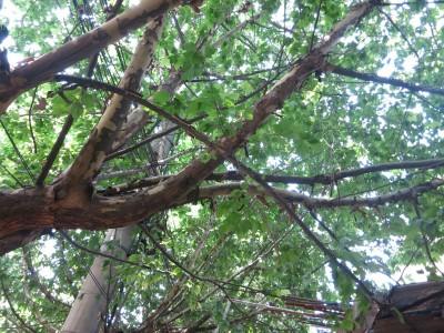 15. Xian Trees Street
