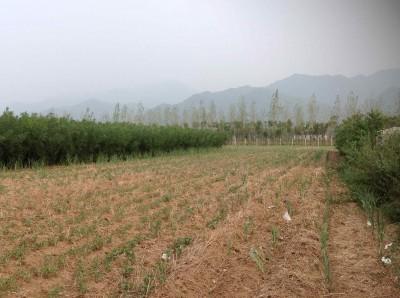 29. Mr. Xi's farm