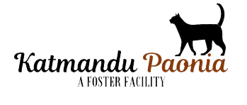 Katmandu Paonia