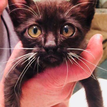 One Last Update on Cuervo aka Titus aka Tiny Cat