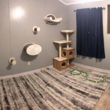 New Kitten Room