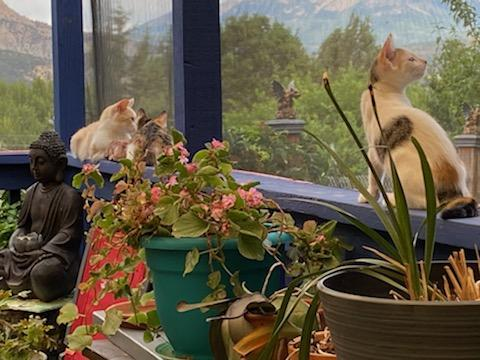 The Creamies in Their New Catio
