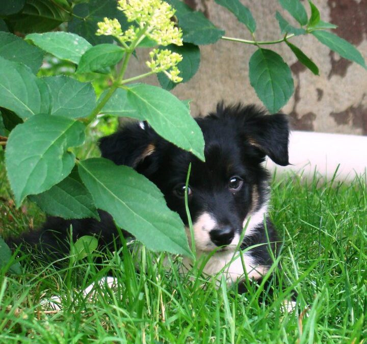 Spring Dangers For Dogs