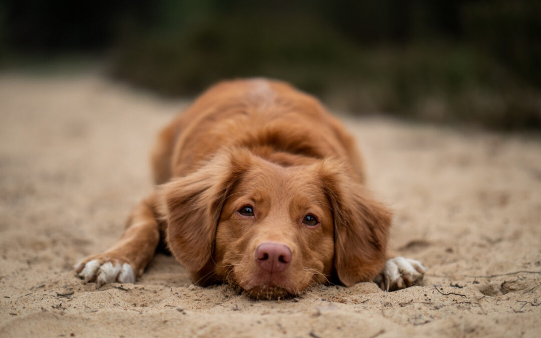 dog desensitization