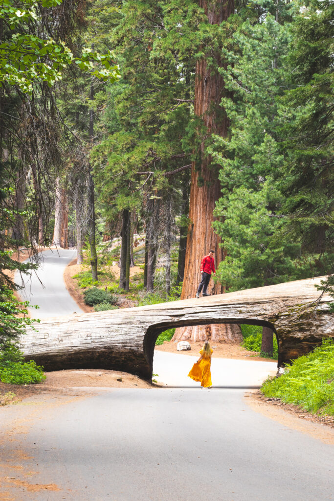 Tunnel Log in Sequoia National Park