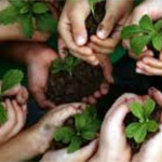 Hands with earth and seedlings