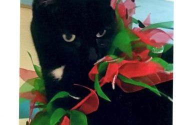 Miss Minnie returns to health after Blu Pet sessions…