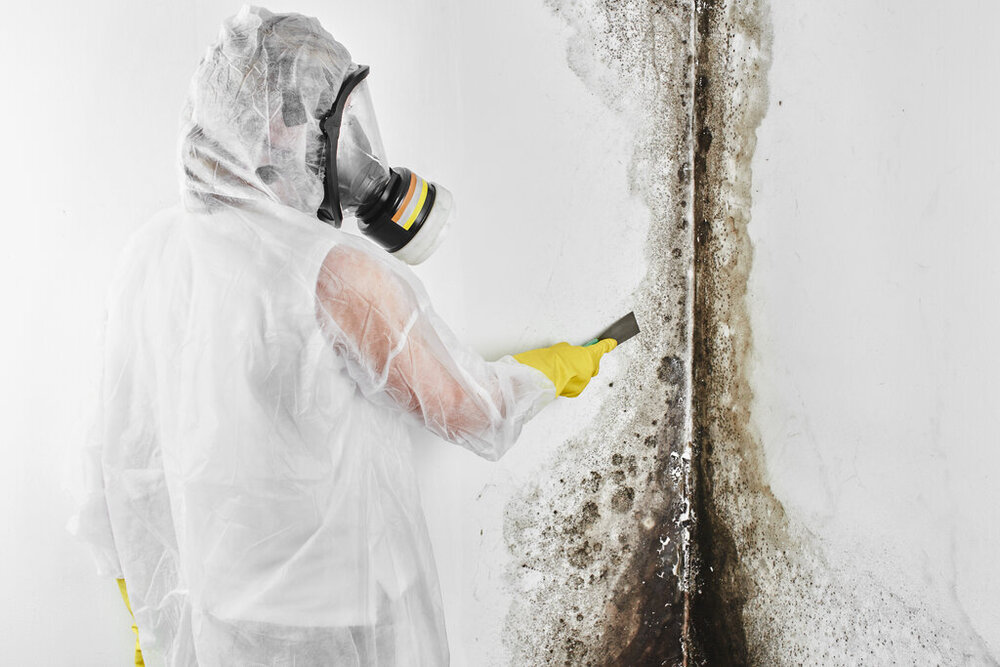 Mold Assessment and Inspection Services in Bay Harbor Islands, FL
