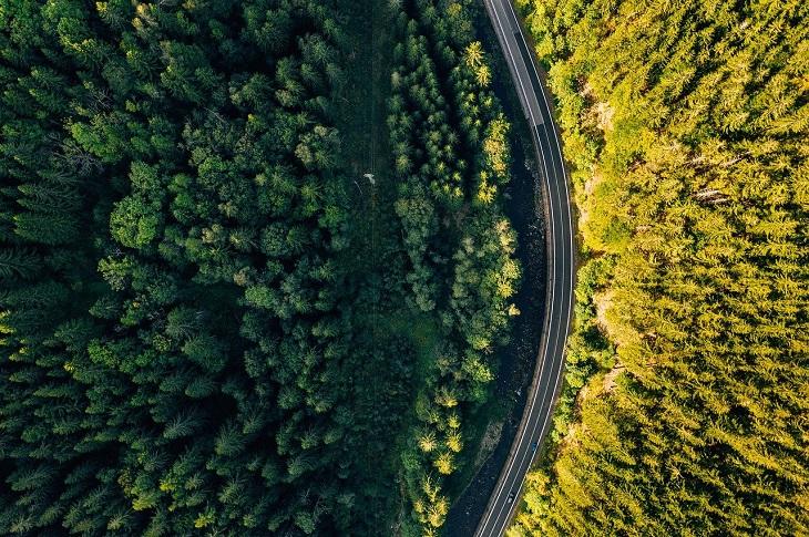 long road through trees