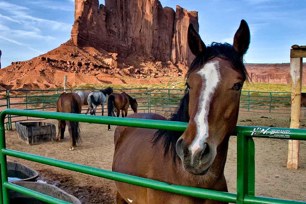 Monument Valley, AZ  IMG_7311-1-CROPPED-B-1200