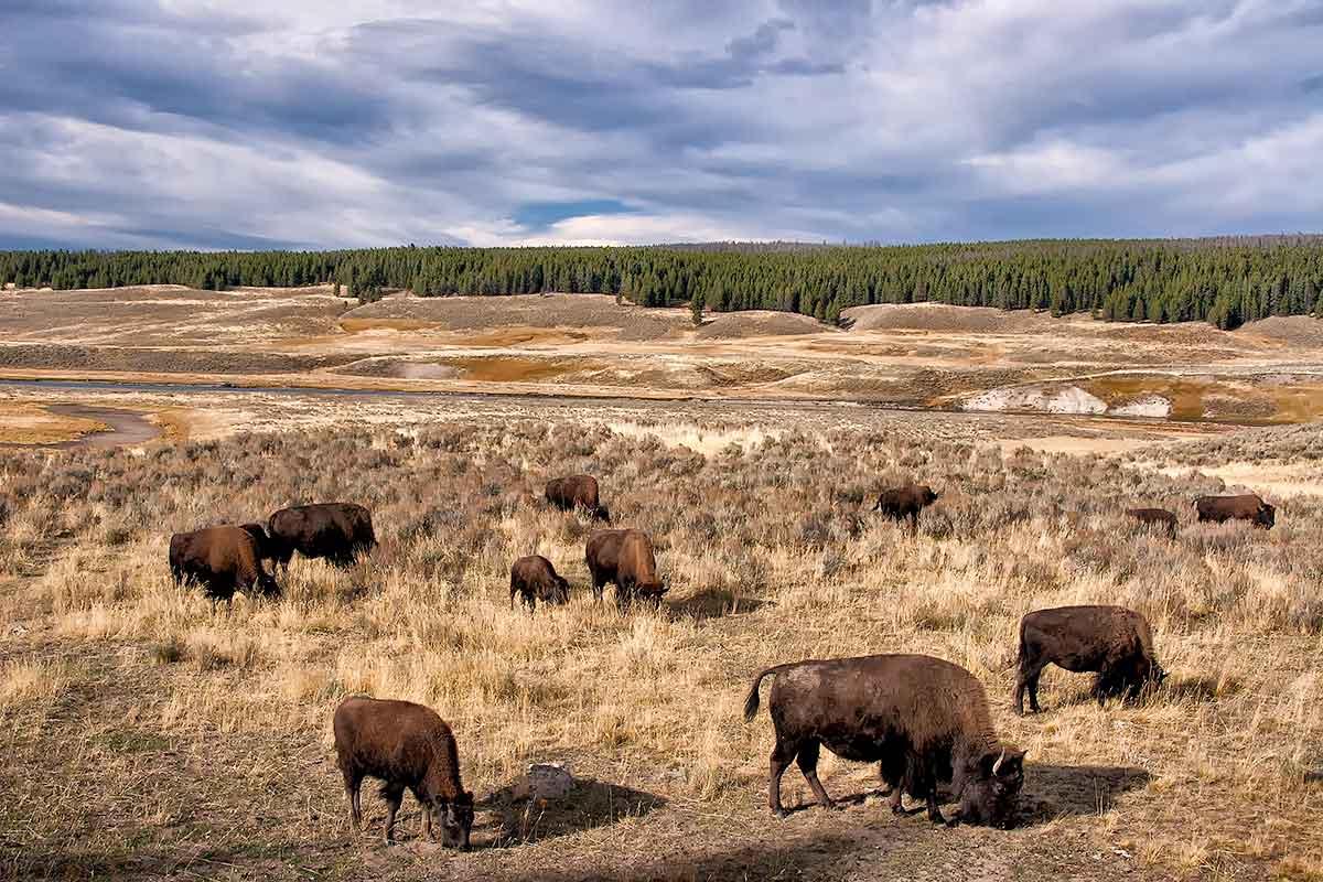 Yellowstone NP  _MG_9198-1200