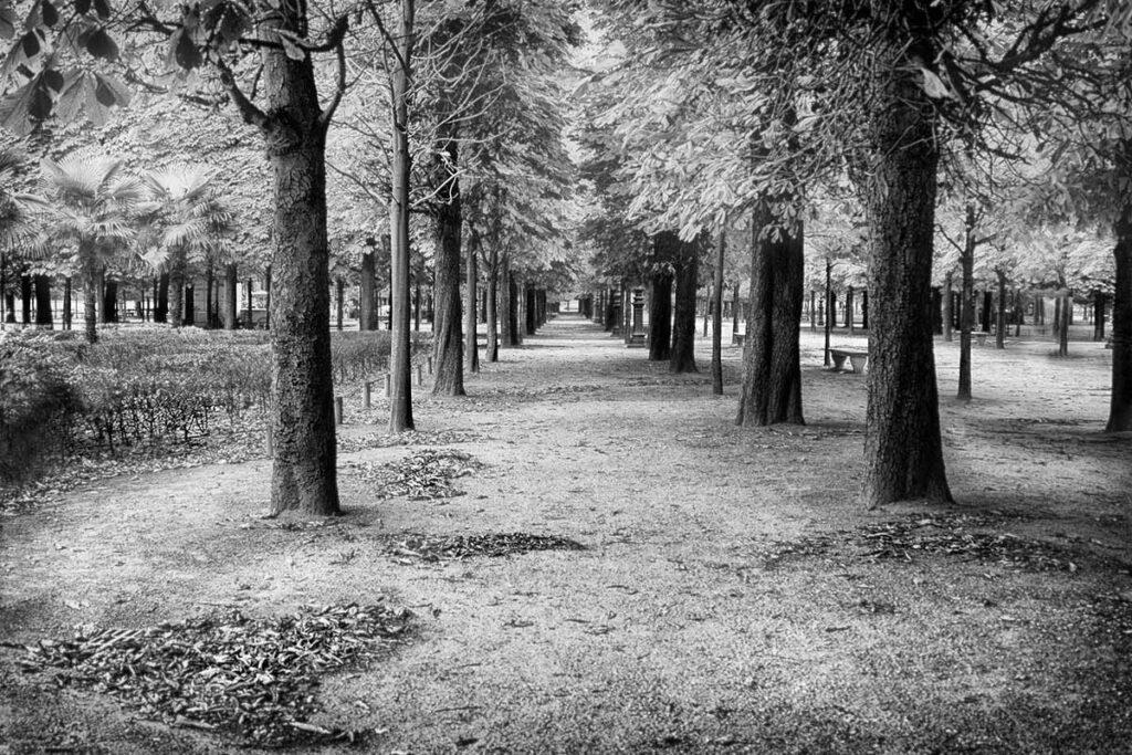 Tuileries Garden , Paris    CRW_0549-1200