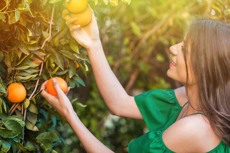 arcadia-citrus