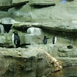 Extend the penguin experience by enjoying them in their Shedd habitat