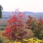 Some of the best fall viewing is from the hills of the Leelanau and Mission Peninsulas