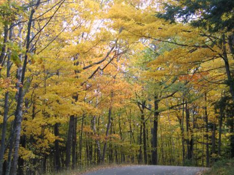 Fall comes in all colors along the forested back roads of Door County in northern Wisconsin