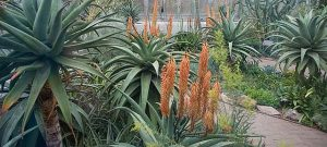 Visit the greenhouses at the Chicago Botanic Garden for a breath of warm air. Chicago Botanic Garden photo.