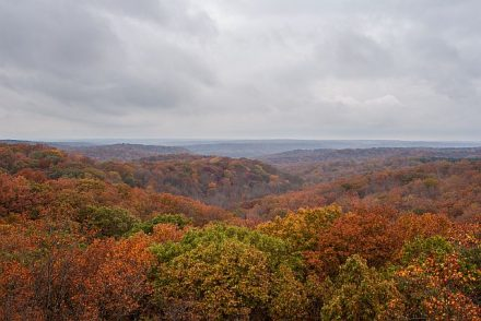 Hoosier National Forest in bloomington, IN puts on a fall color show. (Visit Bloomington photo
