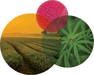 Cannabis and hemp testing for mildew, mold, and other pathogens