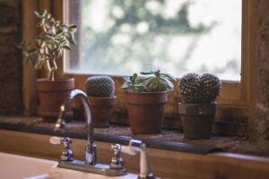 cactus window sill kitchen