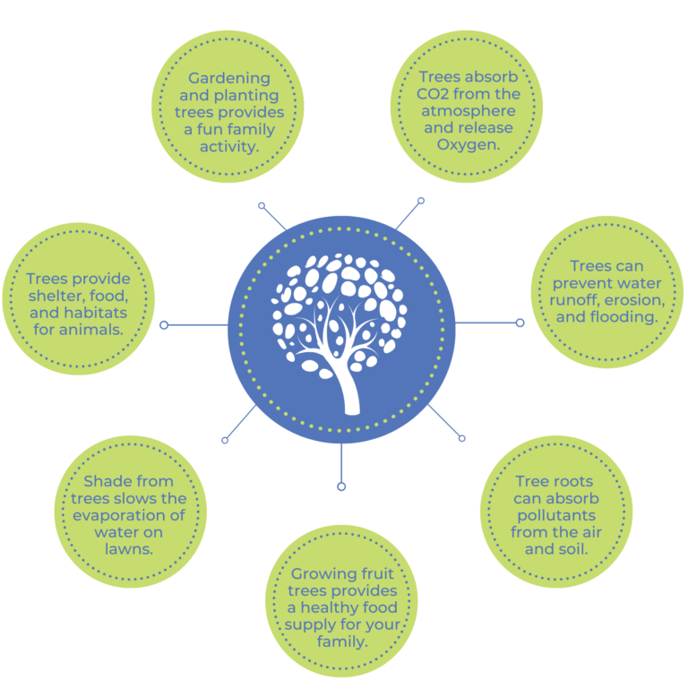 Plant Trees infographic