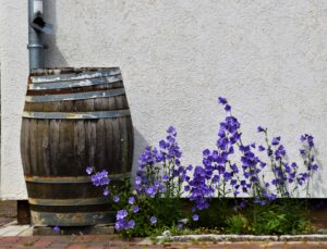 Rain Barrel Flowers