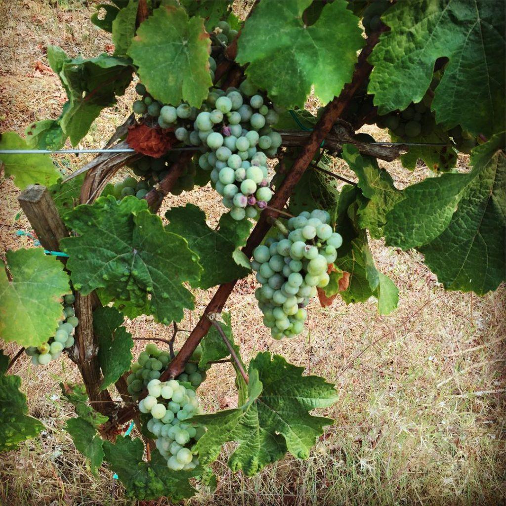 Willamette Valey Winery