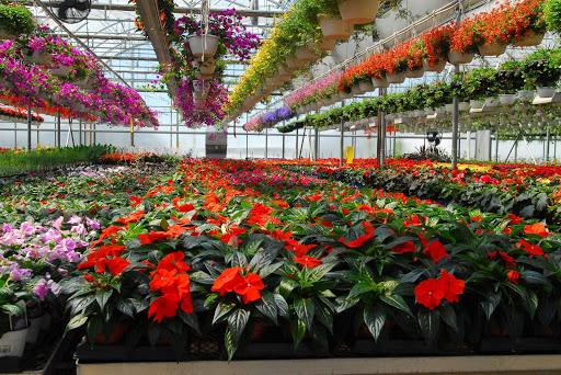 Fleurs jardins plessisville