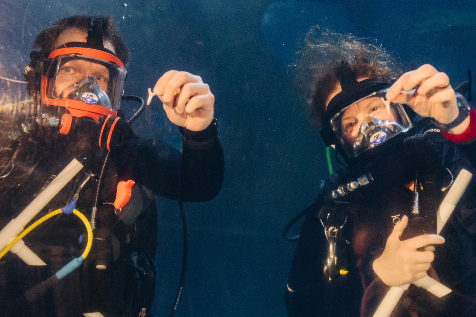Scuba Divers at Greater Cleveland Aquarium