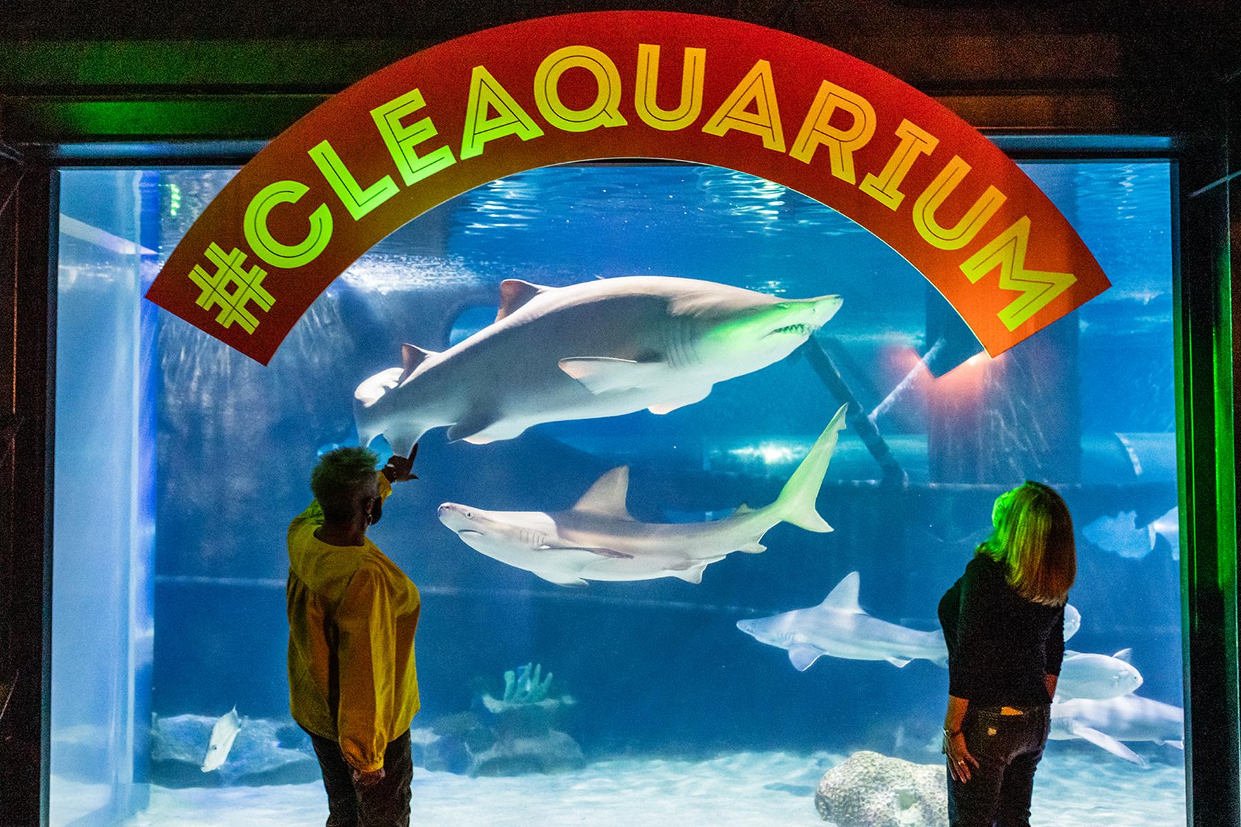 Shark Gallery at Greater Cleveland Aquarium