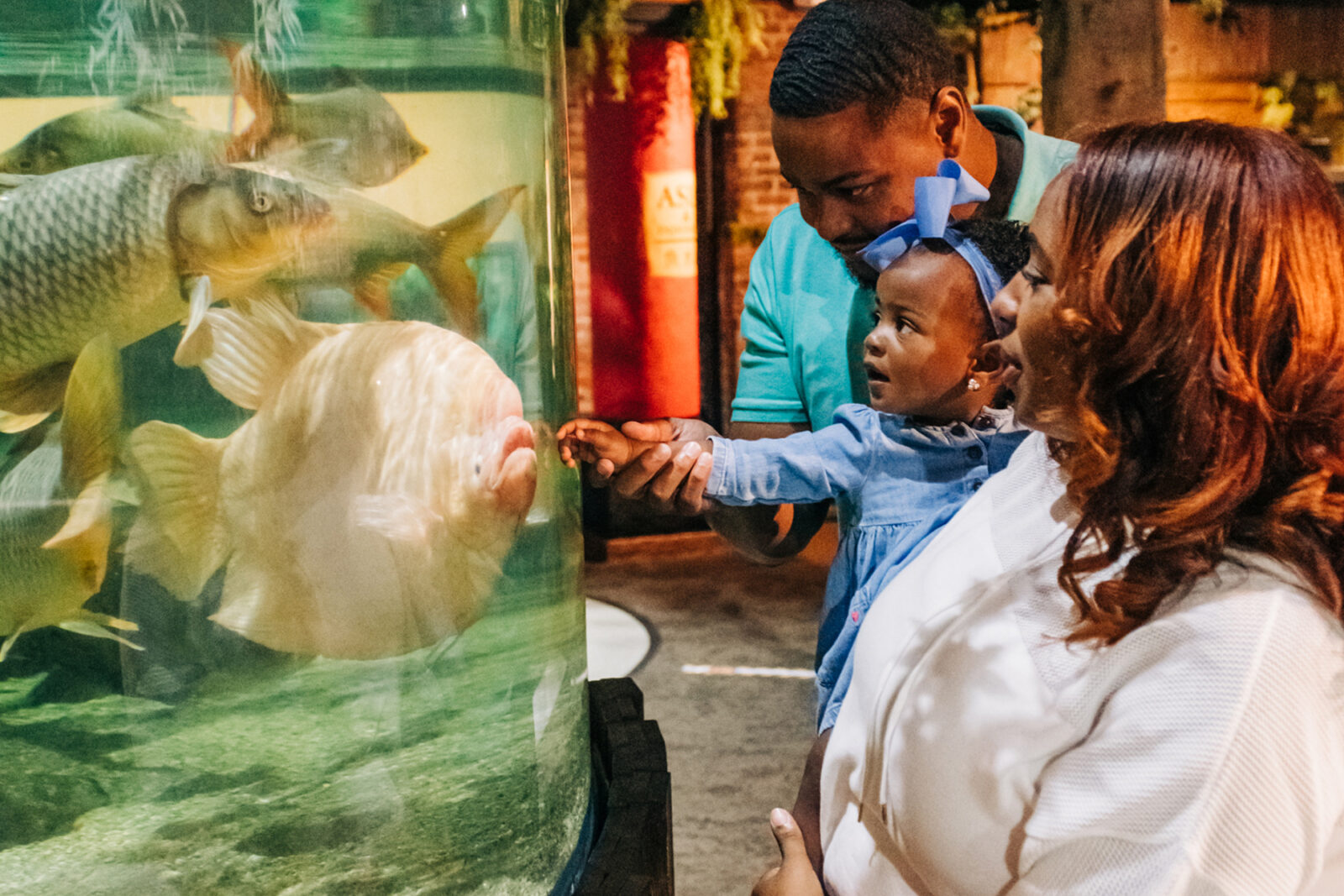 Giant Gourami at Greater Cleveland Aquarium