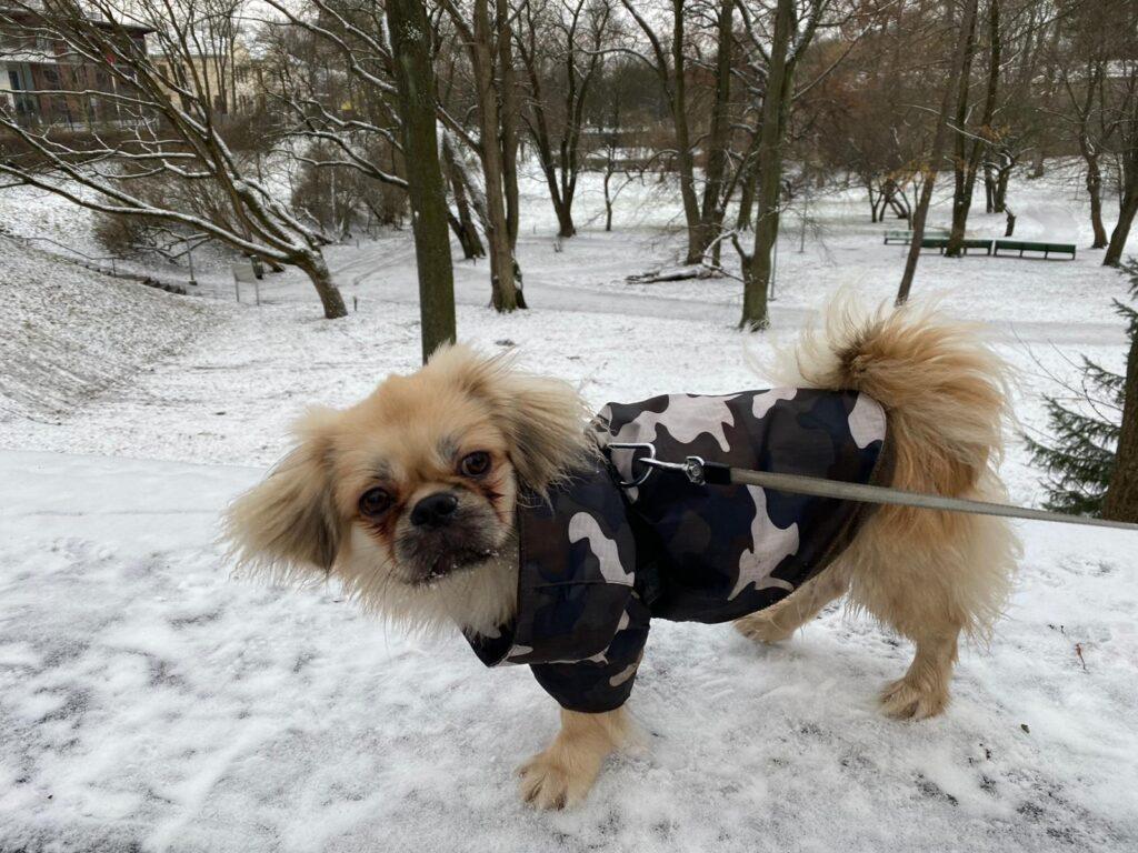 cuidados com pet no inverno na estonia