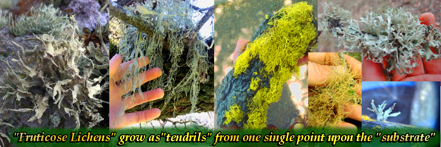"""""""Tendrils"""" are long, slender, fleshy structures that grow in the form of inert tentacles."""