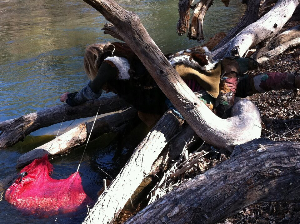 Distance Everheart lowers the California Buckeye nuts into the Kern River after they have been steamed & sliced into chips.