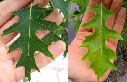 2 leaves
