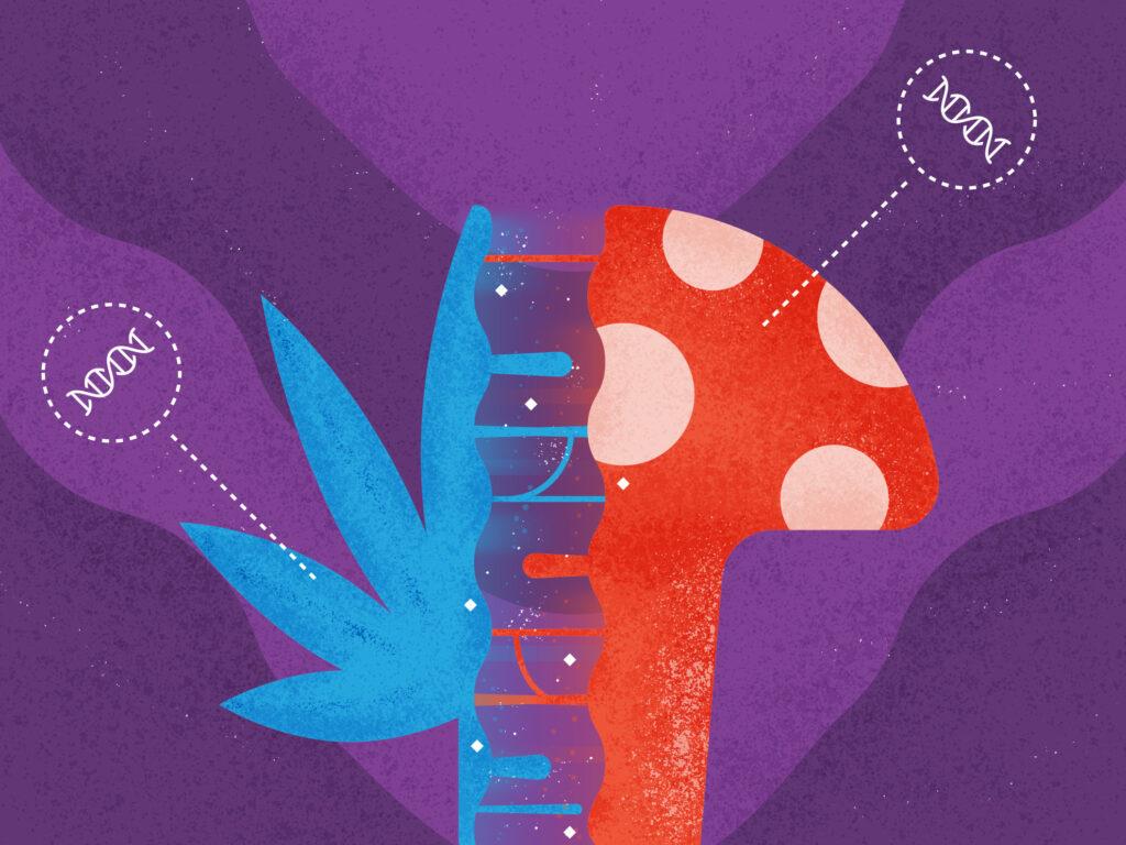 mushrooms and cannabis