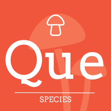 Psilocybe quebecensis