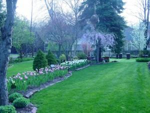 backyard2008 008