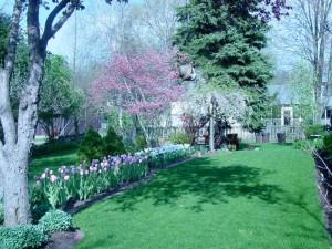 backyard2008 015