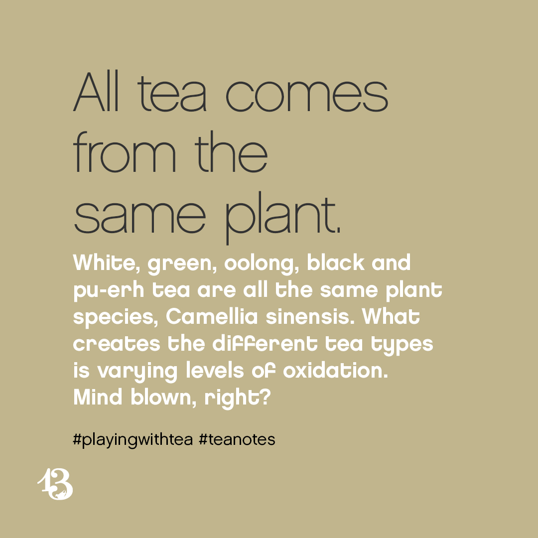 All tea comes from the same plant. White, green, oolong, black and pu-erh tea are all the same plant species, Camellia sinensis. What creates the different tea types is varying levels of oxidation. Mind blown, right?